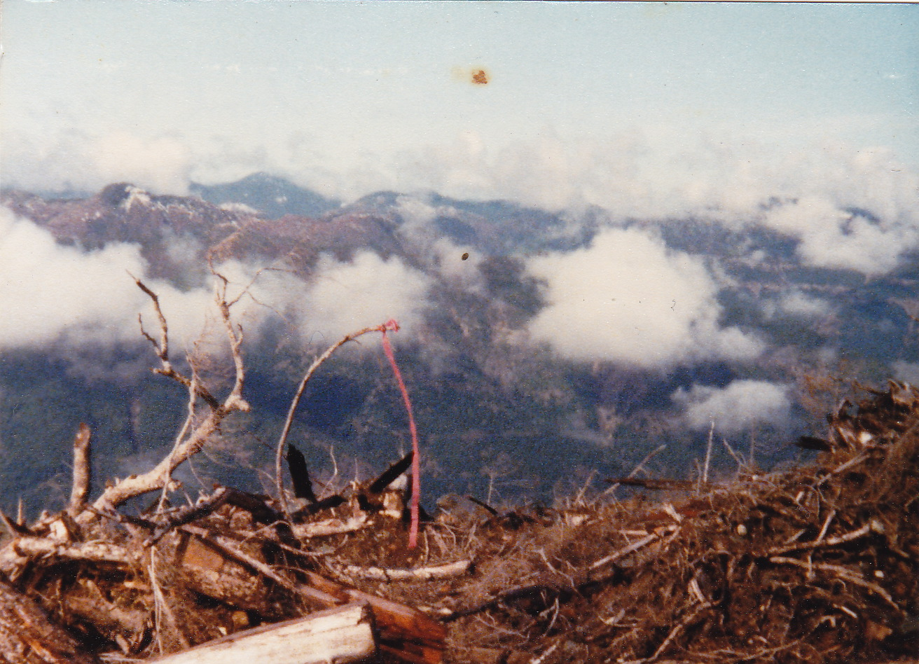 Debris left on logging site, near Lake Cowichan, - Photo taken when author was treeplanting in 1980