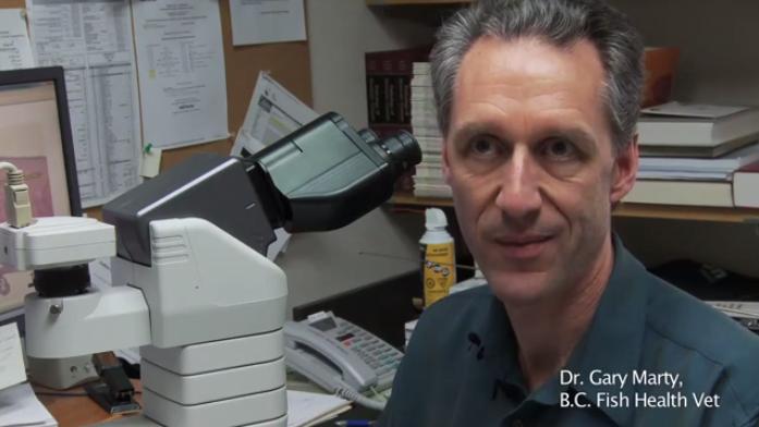 Dr Gary Marty, BC Fish Health Vet - Salmon Confidential Documentary