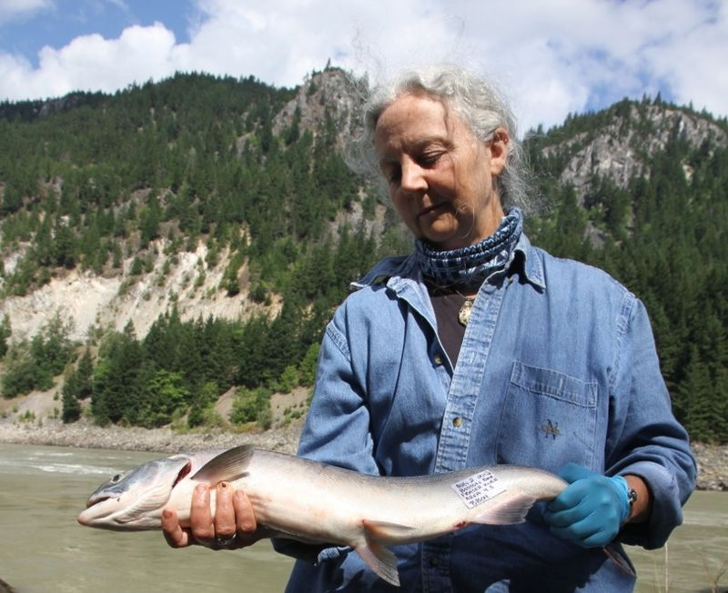 Dr Alexandra Morton with Dead Salmon - Salmon Confidential Documentary