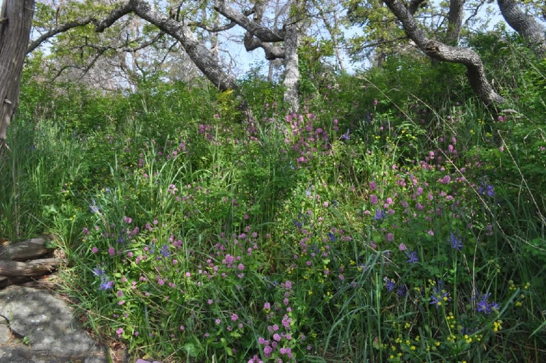 Grace Islet Cama lilies & Sea Blush