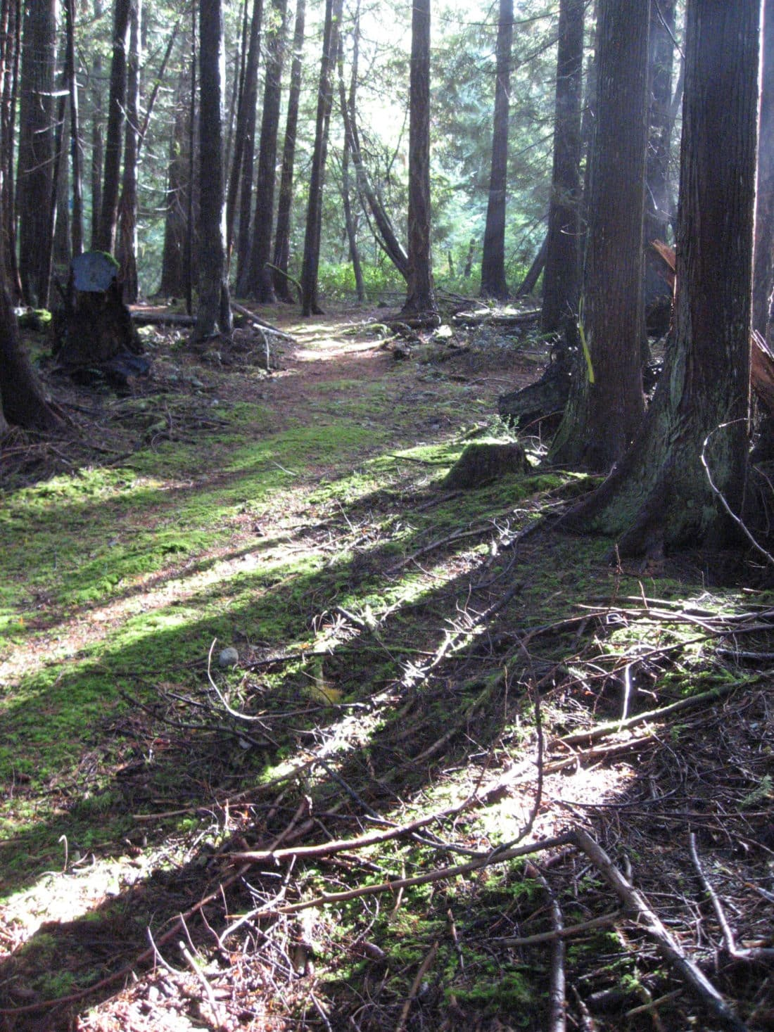 Photo Credit: Path through forest in Squirrel Cove by Roy L Hales
