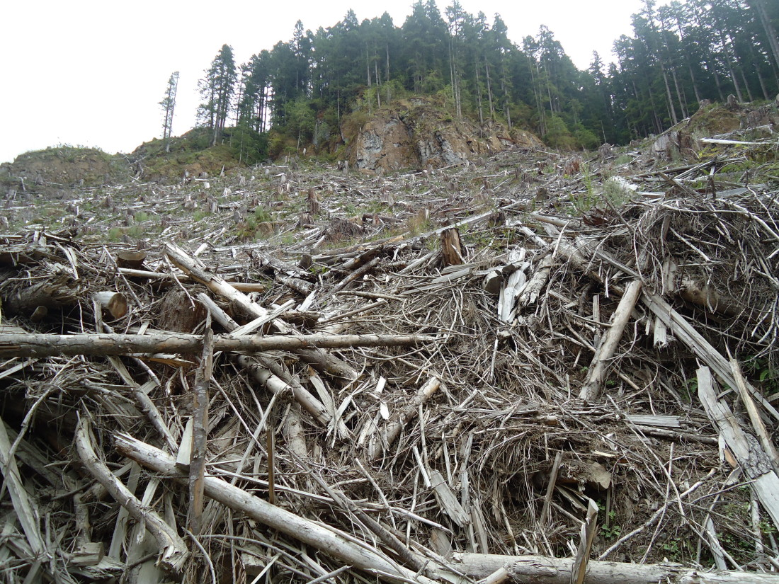 Teal Jones Clear Cut – Courtesy Wilderness Committee
