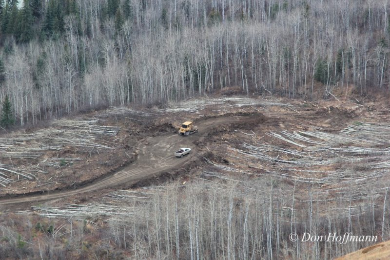 North bank clearing Site C – Courtesy Don Hoffmann