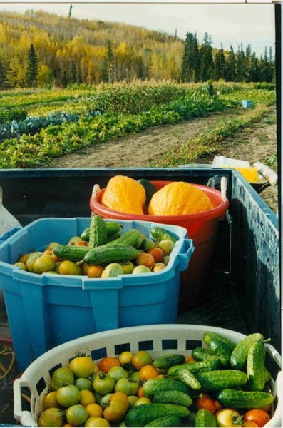 Produce from the land that will be submerged once the Site C Dam is Built -Peterson's Peace River Pictures