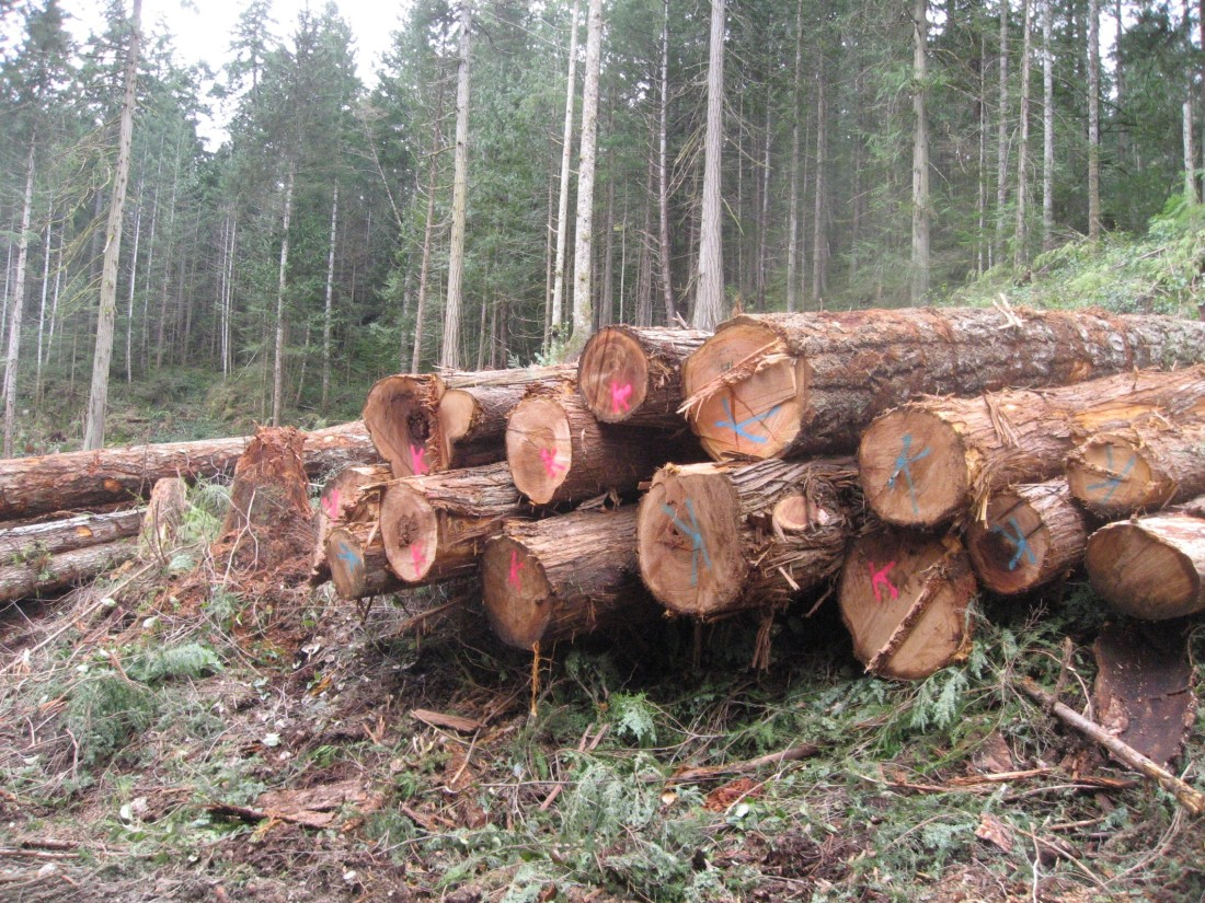 Some of the Logs - Roy L Hales photo