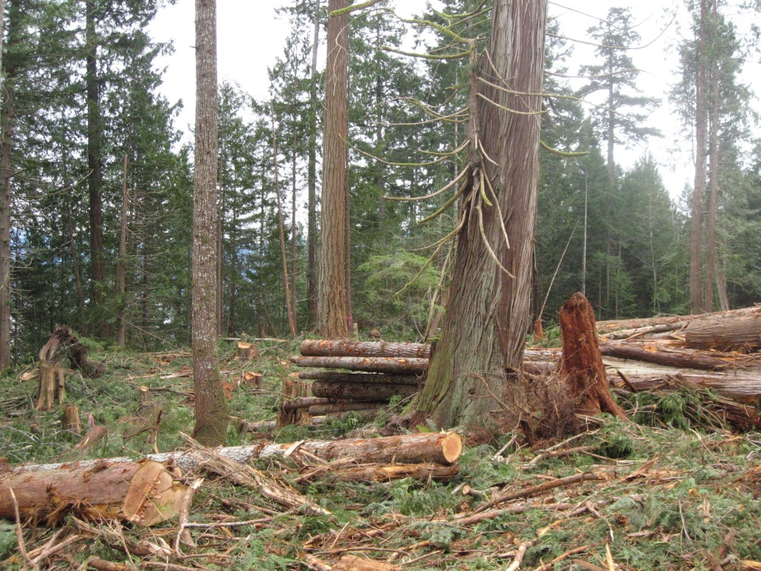 Definitely not Clearcutting - Roy L Hales photo