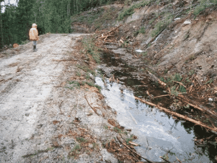 """Photo 7 from the Madrone Report. The caption states """"Water ponded in ditch between two machine access trail. These trails should be put to bed immediately after use."""