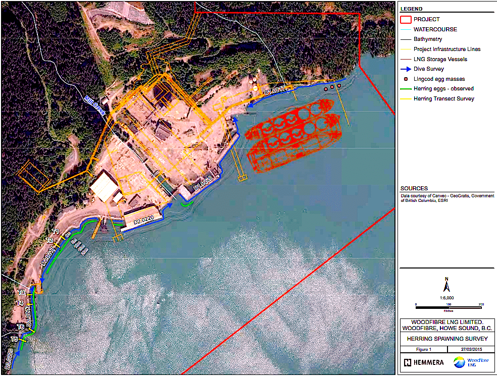 Note the herring spawning grounds (green line), to the left of the proposed Woodfibre LNG site, from Interim Summary Report of Herring Spawn Surveys 1( February 17 and 20) and 2 (March 5), 2015