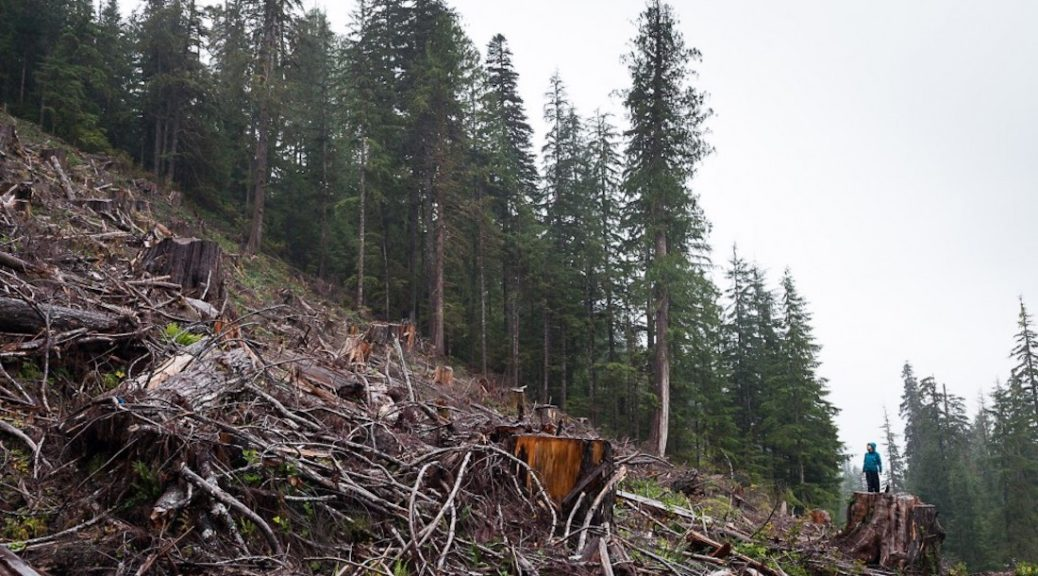 Residue left from previous logging in the Walbran - TJ Watt photo