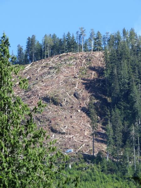New Teal Jones clearcut in the Walbran Valley (Torrance Coste)