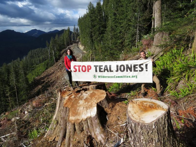 Wilderness Committee activists protest old-growth logging in the Walbran Valley. (Emily Hoffpauir)