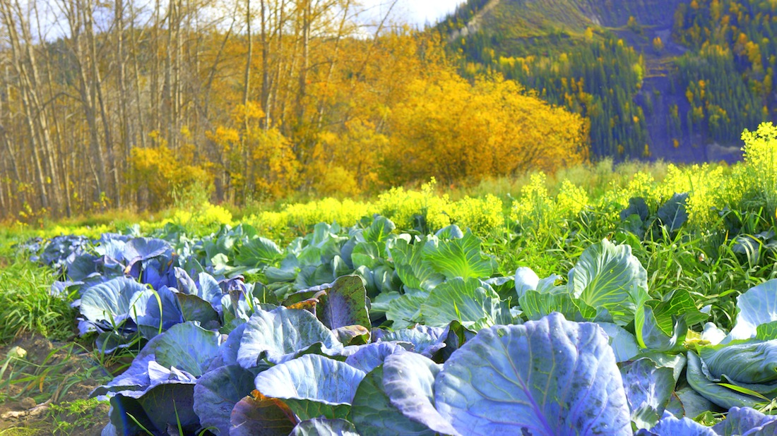 Produce from the Peace River Valley by Andrea Morison