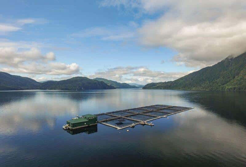 The setting of Phillips Arm Fish Farm - Courtesy MHC