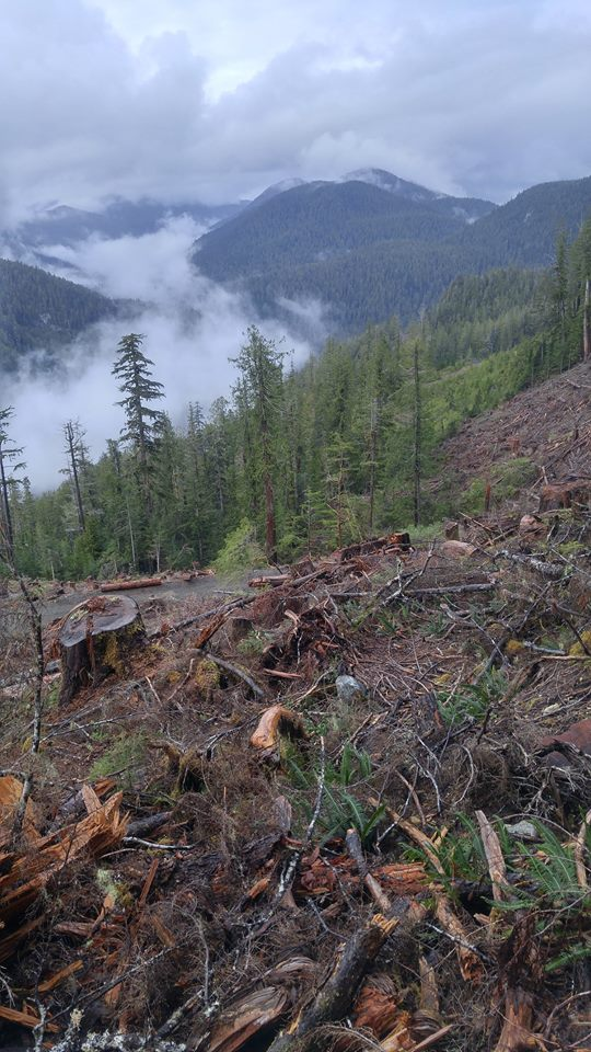 Clearcut in the Walbran Valley - Photo by Ali Harris, courtesy the Wilderness Committee