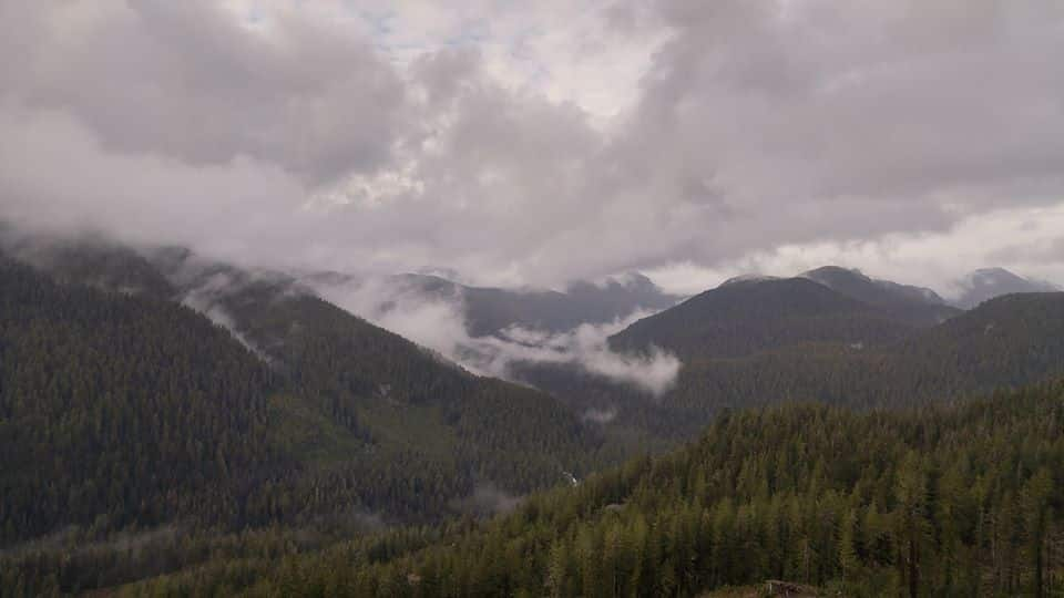 The Walbran Valley - Photo by Ali Harris, courtesy the Wilderness Committee