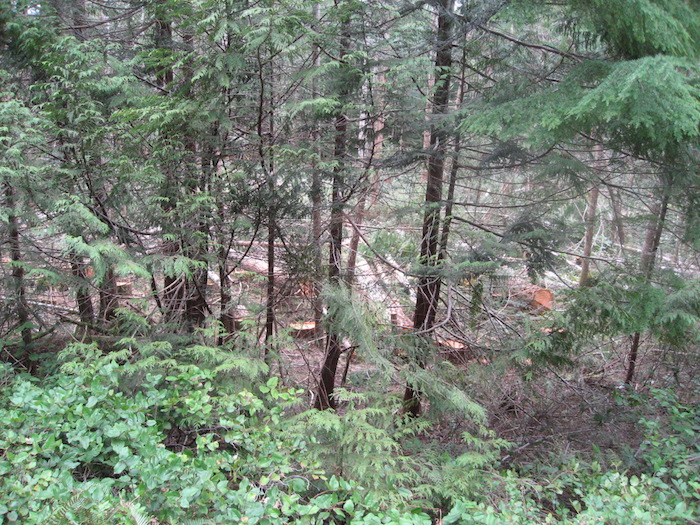 Cortes Community Forest's first five years
