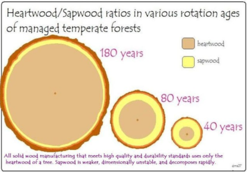 Heartwood vs Sapwood