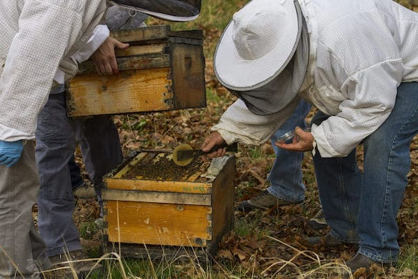 anti-dote for colony collapse disorder