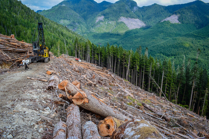 92% of British Columbians want old growth forests protected.