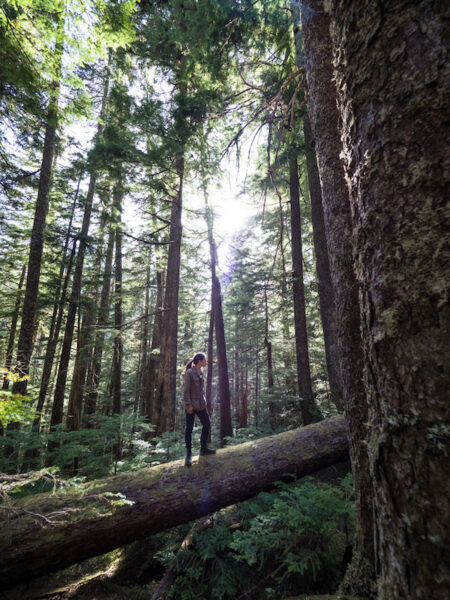 92% of British Columbians want old growth forests protected