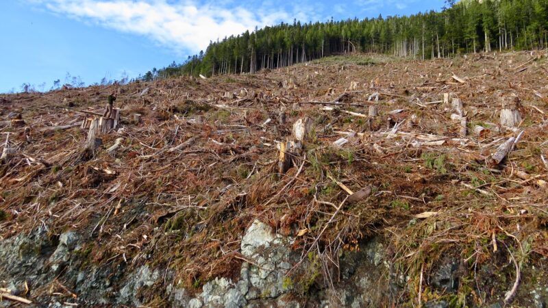 Crises in our forests