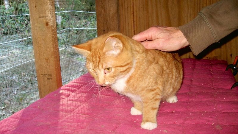 Cortes Cat Rescue