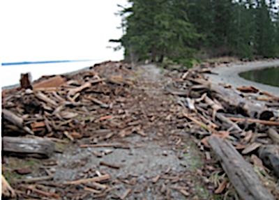 Beach Logs Come & Go