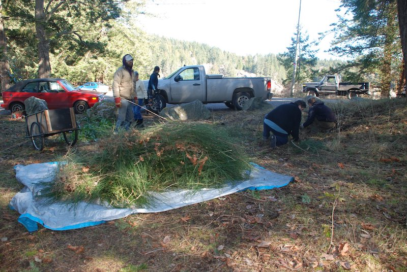 maintaining Cortes Island parks