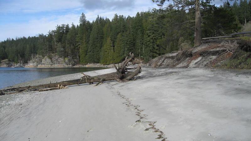 The shoreline of the spit, in Manson's Landing Park, is eroding.