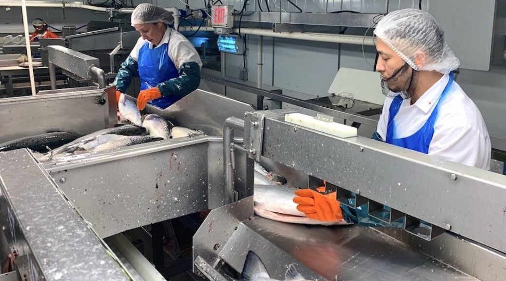 ISLAND SEAFOOD PROCESSORS COPING WITH COVID