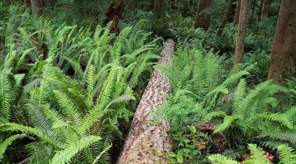 Poaching Wood On Cortes Island