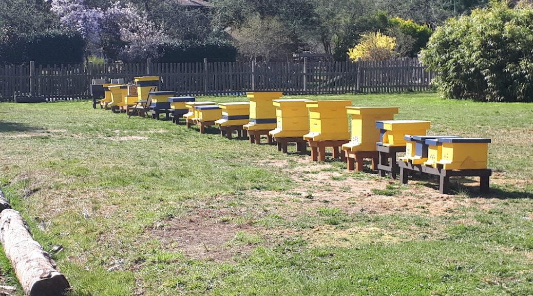 Cortes Island's Bees