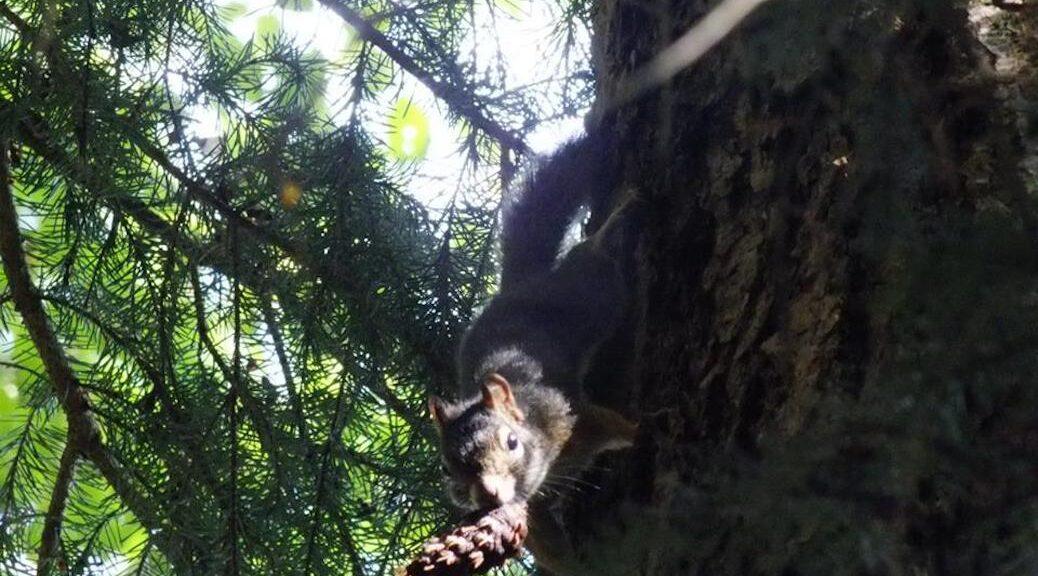Quadra Island Wildlife