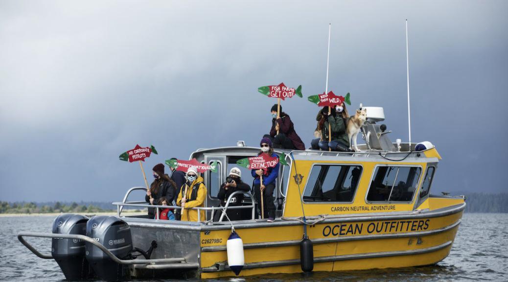wild salmon flotilla