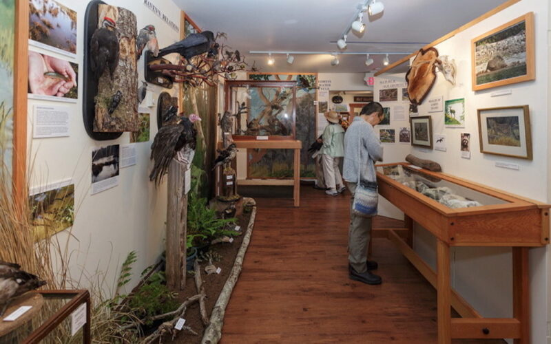 A wildlife exhibit at the Cortes Museum.