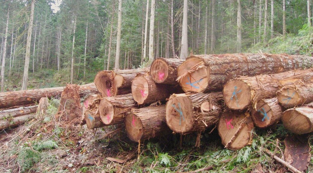 Harvested logs