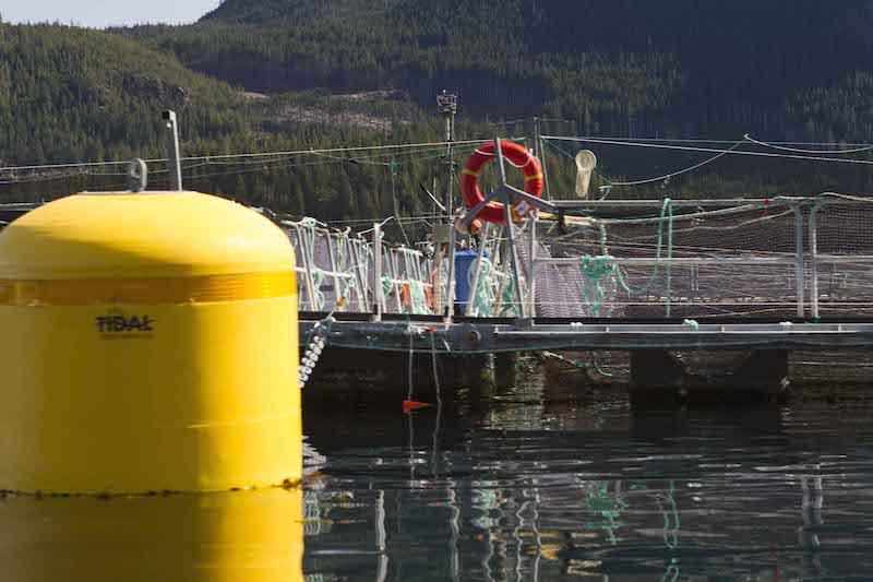 closing down fish farms like this