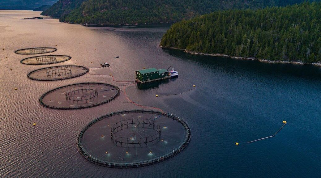 Open-pen fish farm operations in Nootka Sound. The mayor of Tahsis welcomed the federal decision to phase out 19 Discovery Islands fish farm by 2022 and said that the solution going forward is land based aquaculture.