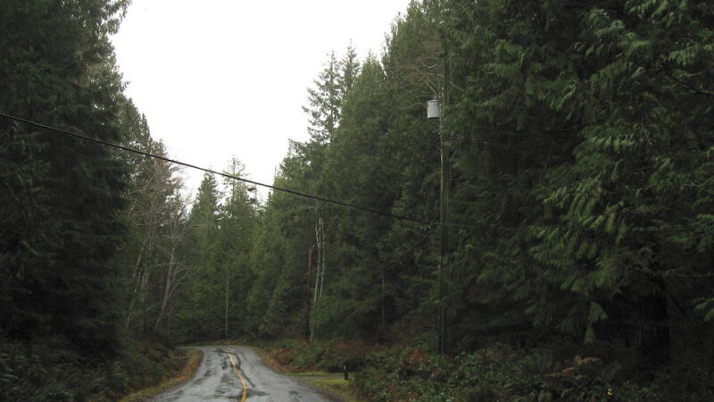 Trees surrounding the cortes island electric grid