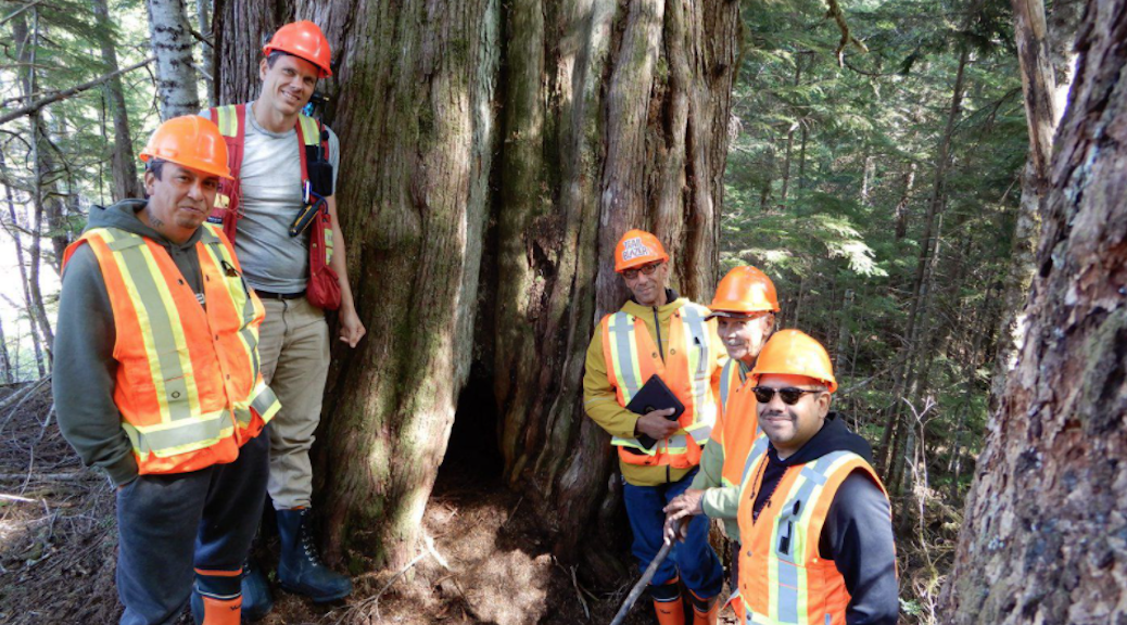 Na̲nwak̲olas Council has developed a large cultural cedar operations protocol to protect sacred old-growth trees from logging.