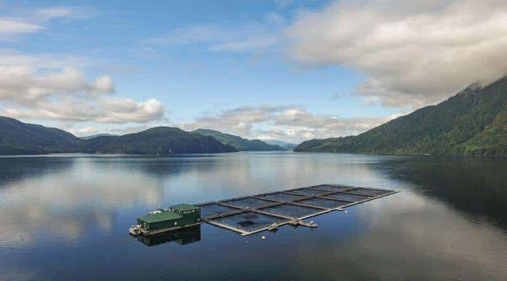 Seeking Judicial review for aquaculture on unceded territory