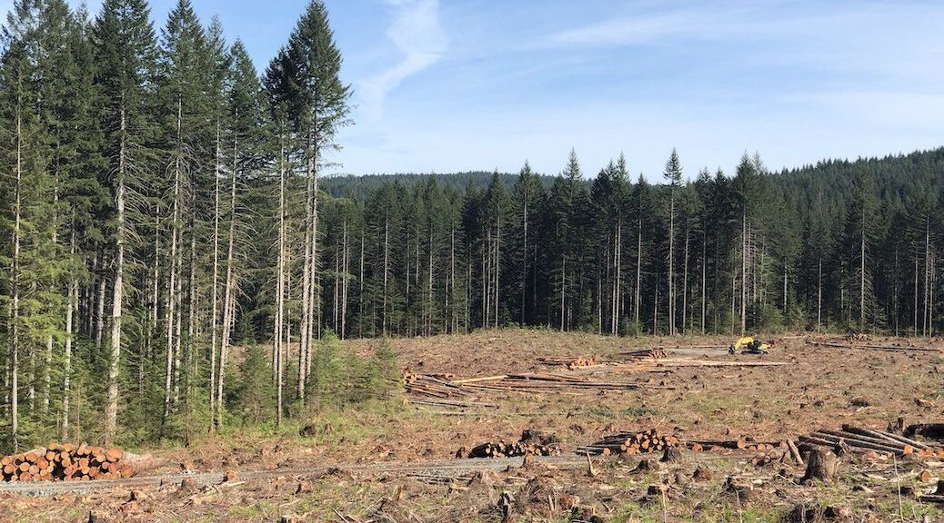 BC CONSIDERING REPORT B.C. LINKING CLIMATE CHANGE TO LOGGING