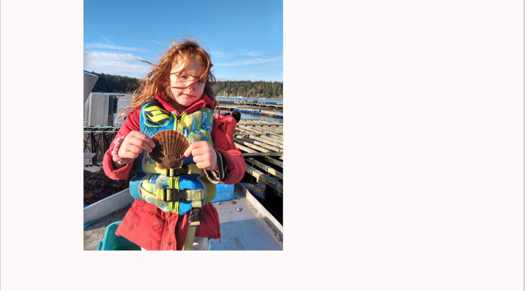 Scallops for sale on Cortes Island