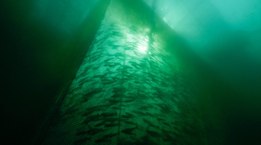 Underwater Sea Farm picture
