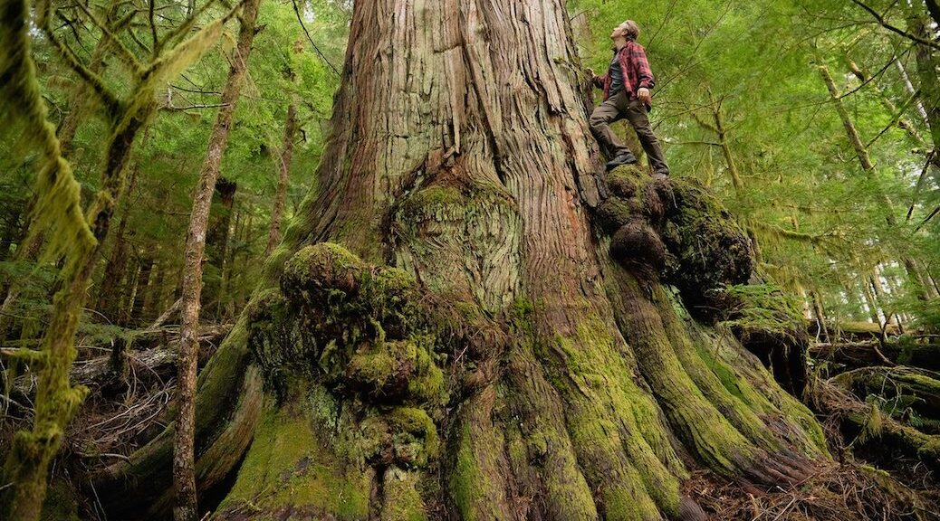 Fairy Creek blockade activists now face arrest if logging company Teal-Jones can't access its old-growth cut blocks on south Vancouver Island.