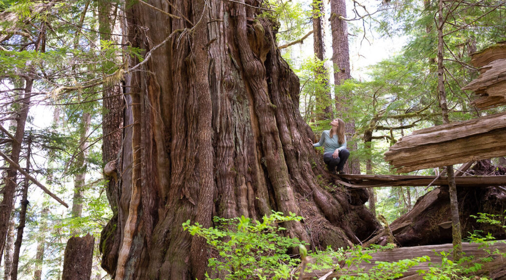 Support Old Growth Strategic Review