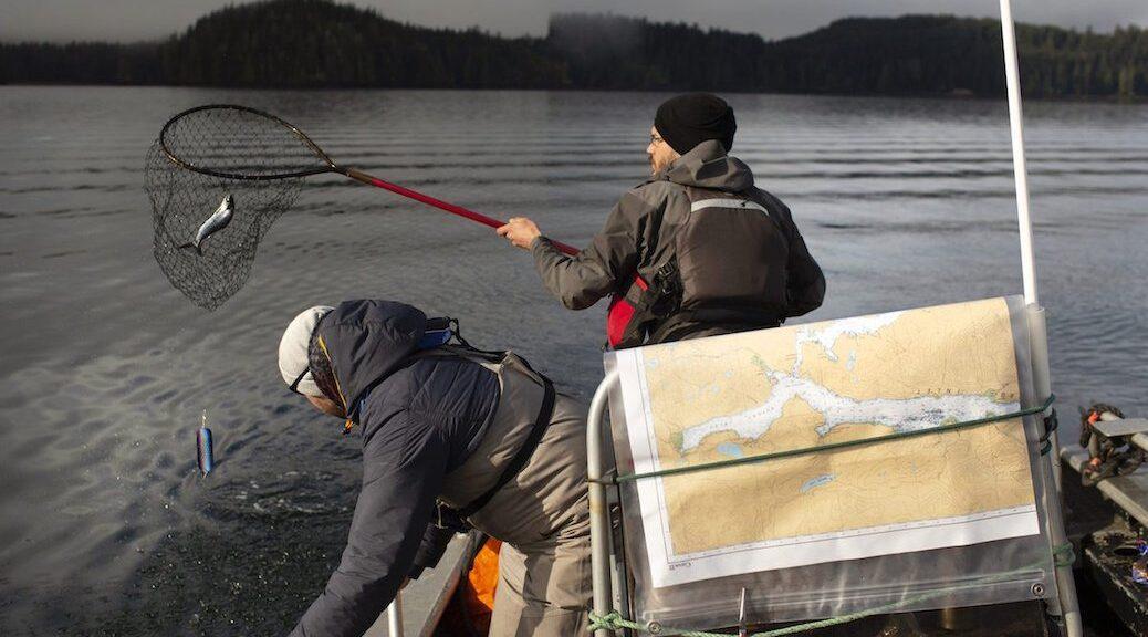 Researchers Emiliano Di Cicco and Andrew Bateman sample wild Pacific salmon for a genomic study on piscine orthoreovirus
