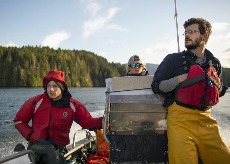 PRV spreads from salmon farms to wild Chinook,