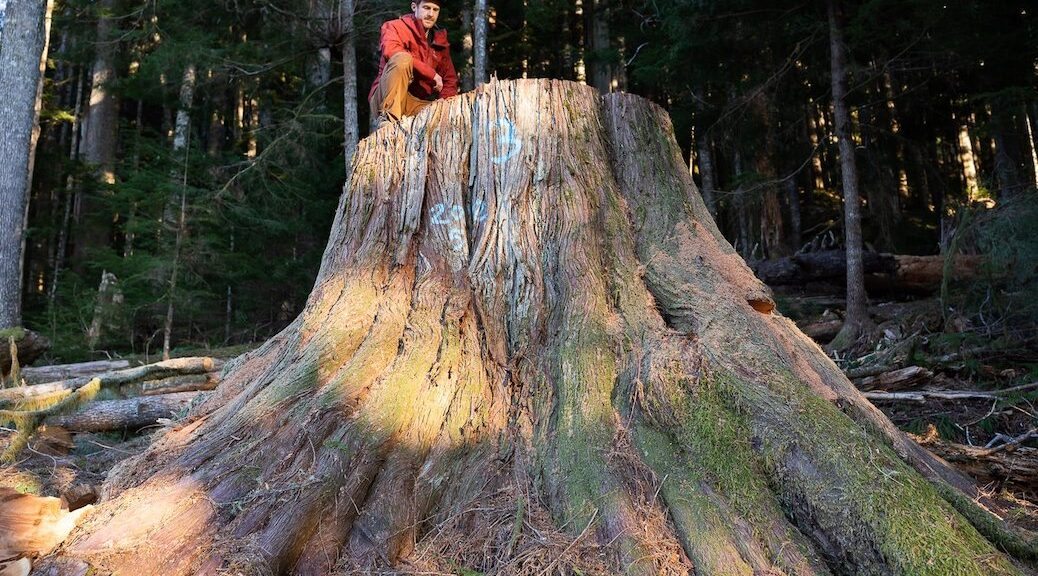 Environmental groups are hoping the appointment of an old-growth advisory panel signals a real shift in B.C.'s old-growth logging policy.