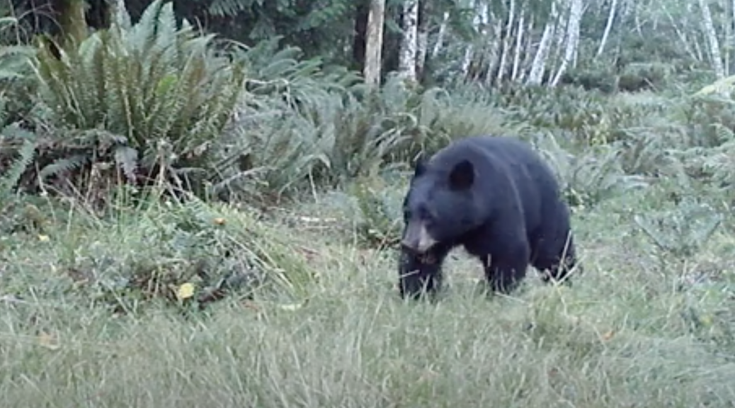 The squirrel Cove Bear
